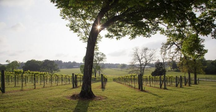 Cure Your Wine Craving With a Trip to West Sandy Creek Winery