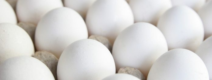 An Egg-citing Donation Arrives for the Food Bank of North Alabama