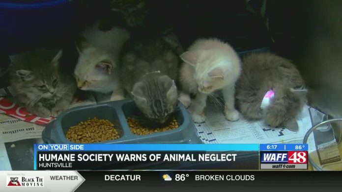Greater Huntsville Humane Society seeing more abused animals during pandemic