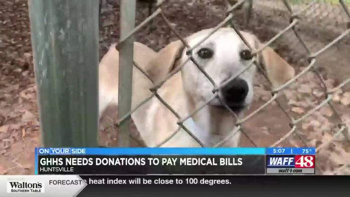 Greater Huntsville Humane Society needs donations to pay mounting medical bills