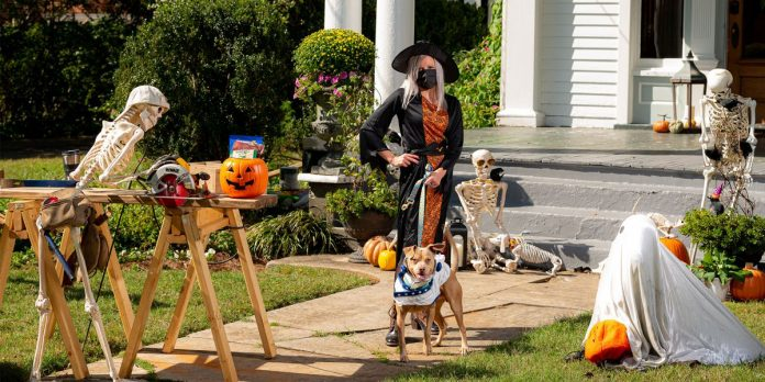Find your BOO: Shelter pets go trick-or-treating to find forever homes