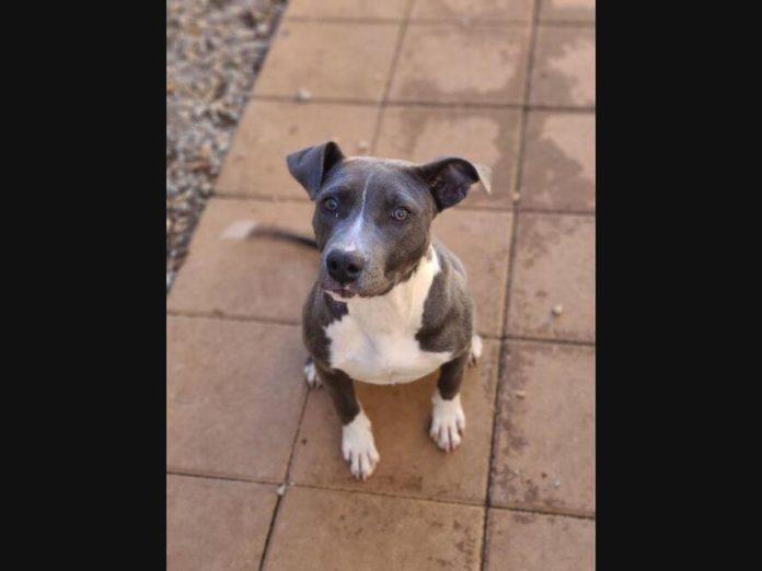 Huntsville Pets Up For Adoption: Emma Grace, Bo, Monkey & More