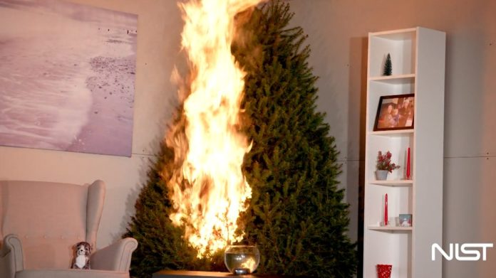 Christmas trees might be more dangerous than you think