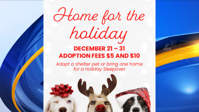 Huntsville Animal Services discounting adoption fees to help furry friends go home for the holidays