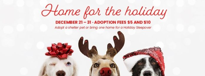 Help a Shelter Pet Find a Home for the Holidays!