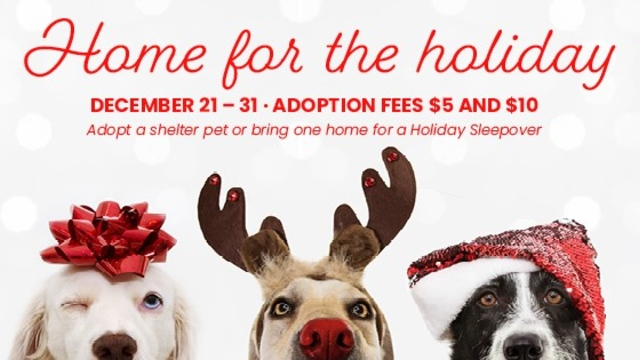 Huntsville Animal Services reduces adoption fees during 'Home for the Holidays' special