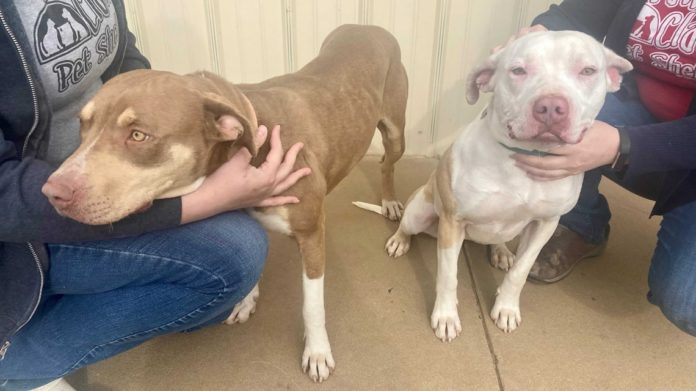 Adopt-A-Pet: Maple, Pearl, Moose and Tate in Huntsville