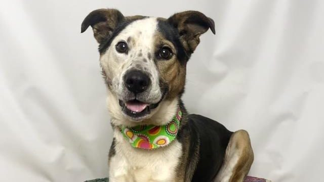 Huntsville Animal Services lowers adoption fees for rest of January