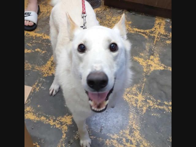 Huntsville Pets Up For Adoption: Meet Westin, Prescott, Orlando & More