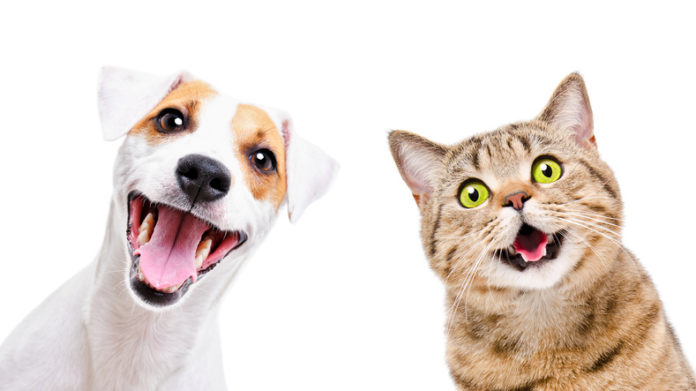 Huntsville Animal Services offering $5 pet adoption special